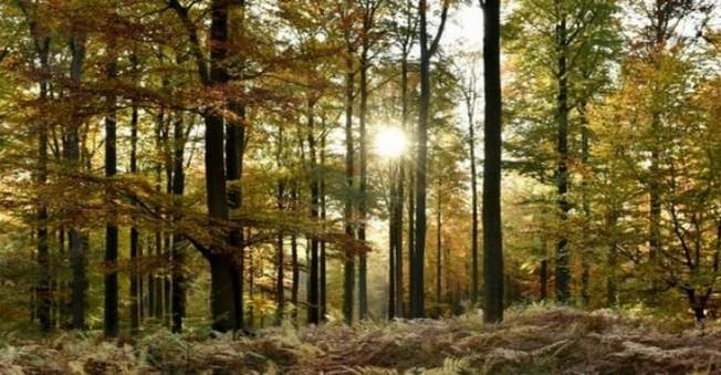 20 Yıl Önce Kayboldu Şans Eseri Orman'da Bulundu