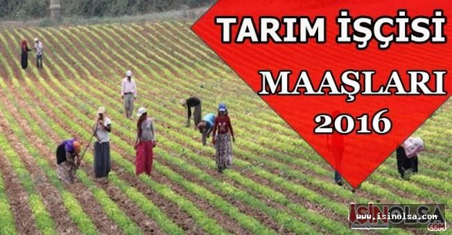 Tarım İşçisi Maaşları 2016