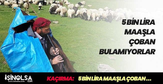 5 Bin Lira Maaşla Çoban Arıyorlar! Şaşırtan İlan