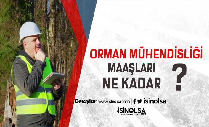 2019 Orman Mühendisi Kamu ve Özel Sektör Maaşları