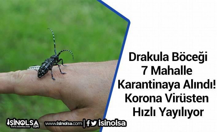 Drakula Böceği: 7 Mahalle Karantinaya Alındı! Korona Virüsten Hızlı Yayılıyor