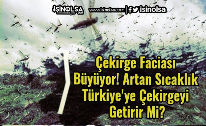 Çekirge Faciası Büyüyor! Artan Sıcaklık Türkiye'ye Çekirgeyi Getirir Mi?