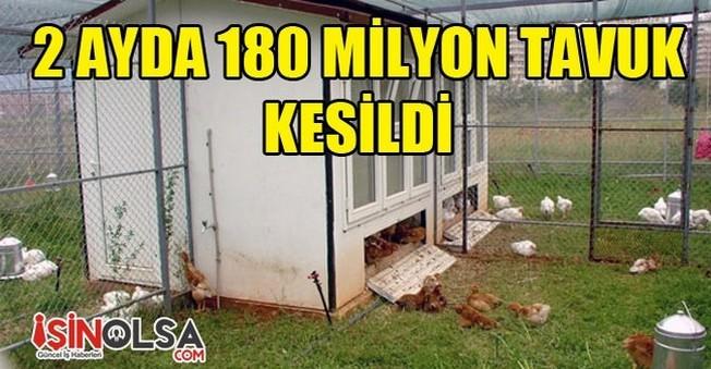 İki Ayda Kesilen tavuk Sayısı 180 Milyon