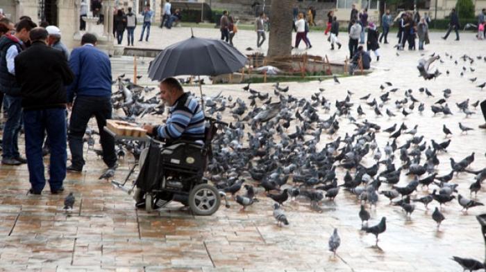 İzmir'de Yaşanan Kuş Cinayeti Tepki Çekti