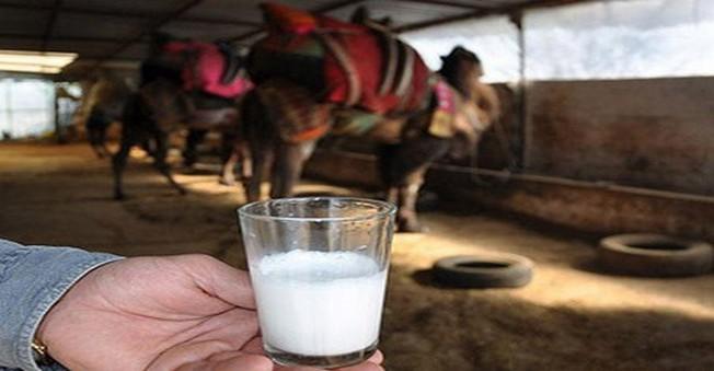 Litresi 50 Liraya Deve Sütü Yok Satıyor