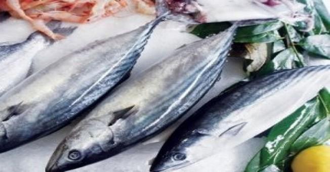 Palamut Balıkçıları Üzdü,Beklentileri Karşılayamadı!