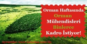 21 Mart Orman Haftasında Orman Mühendislerinden Atama Talebi
