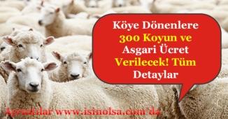 Köye Dönene Ailelere 300 Koyun ve Asgari Ücret Maaş Verilecek! Şartlar Nelerdir?