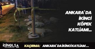 Ankara' da İkinci Köpek Katliamı! Vicdansızlığın Bu Kadarı