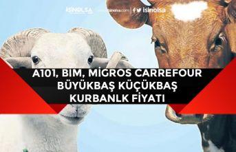 A101, Bim, Migros, Carrefour 2020 Büyükbaş Küçükbaş Kurbanlık Fiyatları!