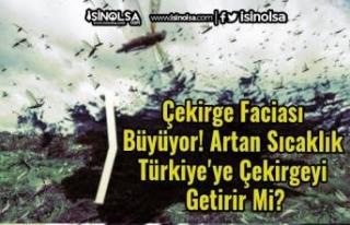 Çekirge Faciası Büyüyor! Artan Sıcaklık Türkiye'ye...