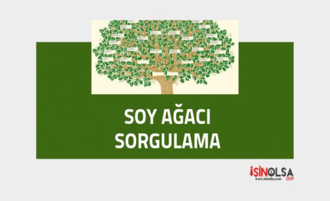 Soy ağacı nasıl bulunur? (3 Adımda Sorgulama)