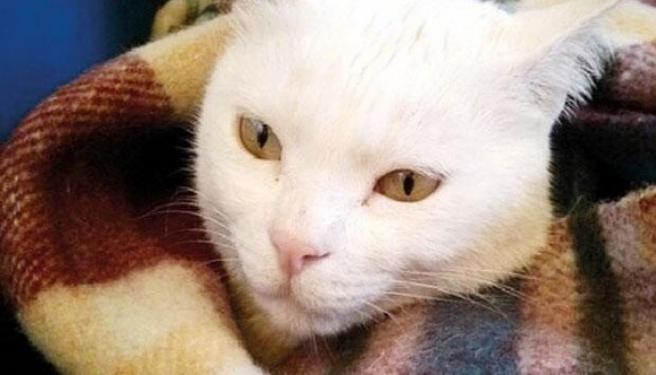 Kedinin Velayetini Mahkeme Kararlaştırdı