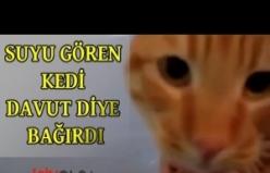 Sudan Korkan Kedi Davut Diye Bağırdı