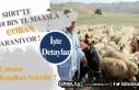 10 Bin TL Maaşla Çoban Aranıyor!